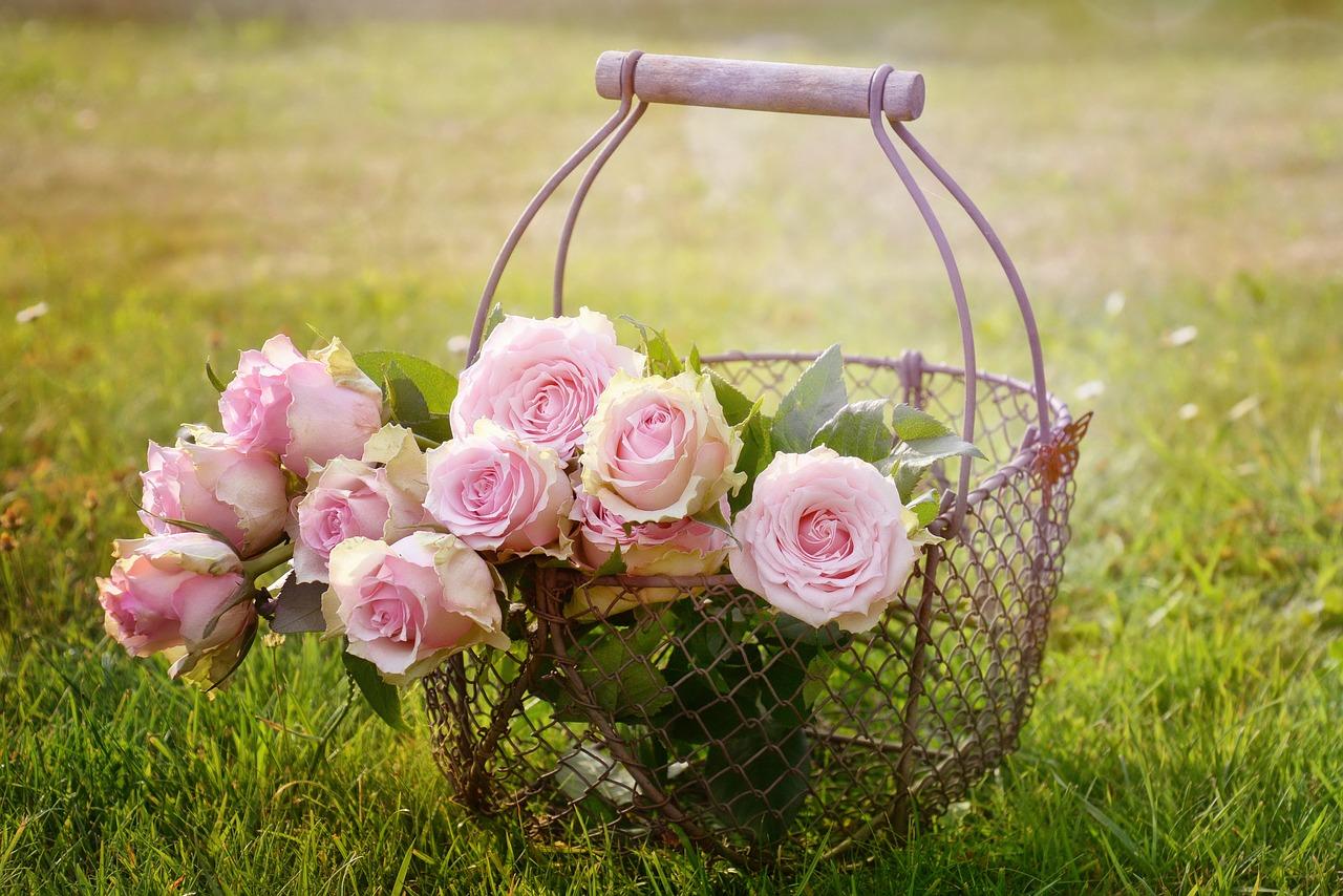 Rose éternelle sous cloche en verre : prix & description